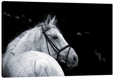 Bridled Beauty Canvas Art Print