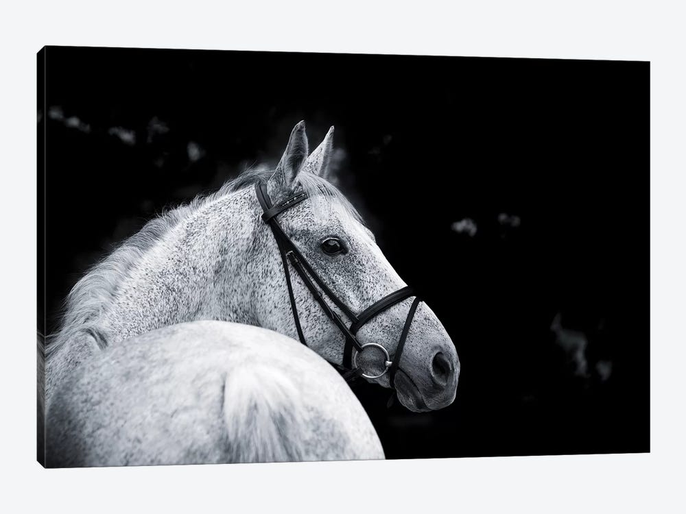 Bridled Beauty by KaCee Erle 1-piece Canvas Art
