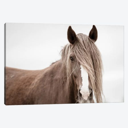 Wild Mane Canvas Print #KCE2} by KaCee Erle Canvas Art