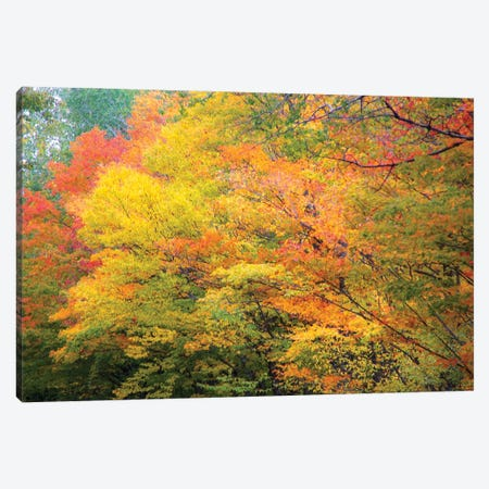 Fall Colors Canvas Print #KCF102} by Kevin Clifford Art Print