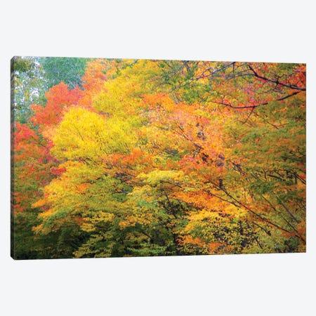 Fall Colors Canvas Print #KCF102} by Kevin Clifford Art Print
