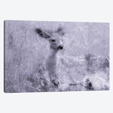 Inquisitive Deer Canvas Print #KCF106} by Kevin Clifford Canvas Artwork