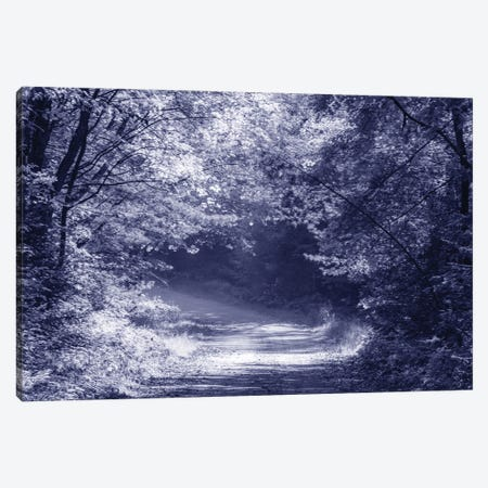 Afternoon Sunlight Canvas Print #KCF111} by Kevin Clifford Canvas Wall Art