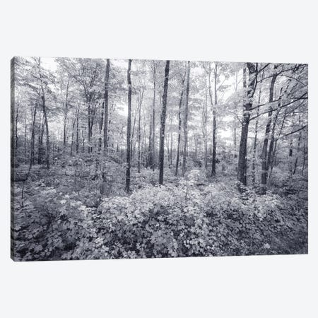 Afternoon Trees Canvas Print #KCF112} by Kevin Clifford Canvas Artwork