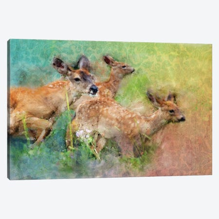 Splashy Deer Family Canvas Print #KCF11} by Kevin Clifford Canvas Print