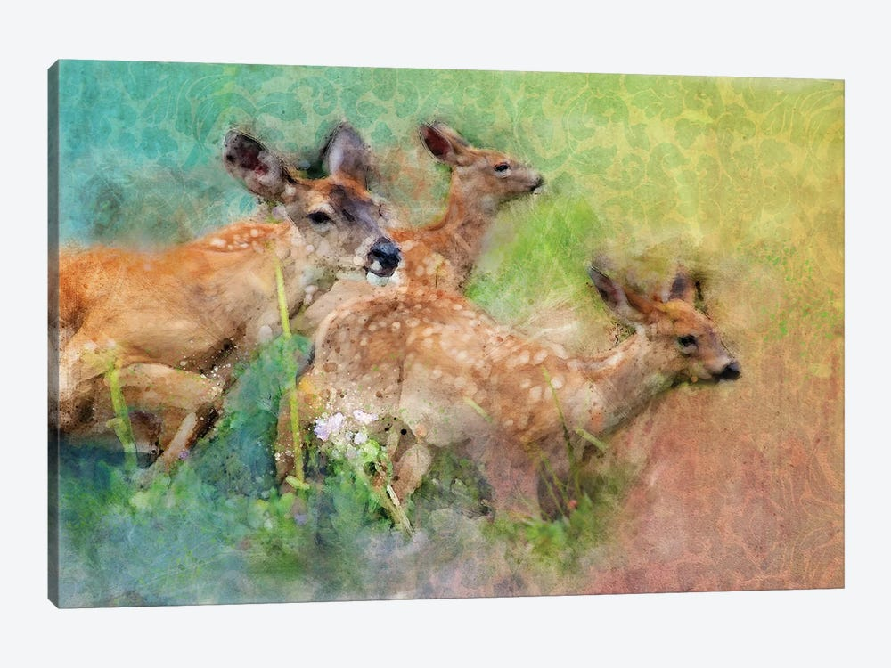 Splashy Deer Family by Kevin Clifford 1-piece Canvas Wall Art