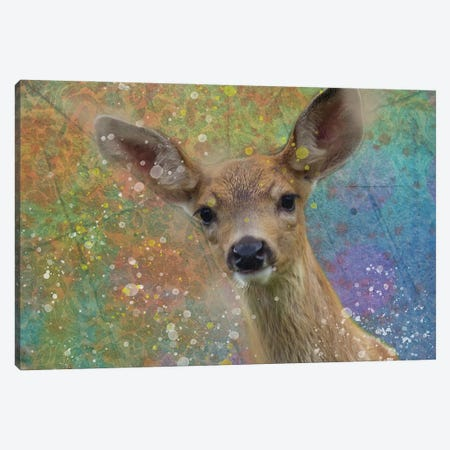 Splashy Fawn Canvas Print #KCF13} by Kevin Clifford Canvas Art Print
