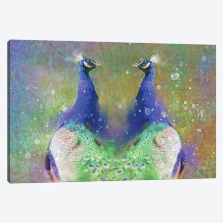 Twin Splashy Peacocks Canvas Print #KCF1} by Kevin Clifford Canvas Art Print