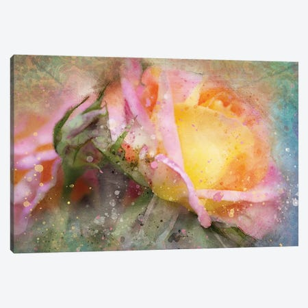 Splashy Yellow Rose Canvas Print #KCF26} by Kevin Clifford Art Print