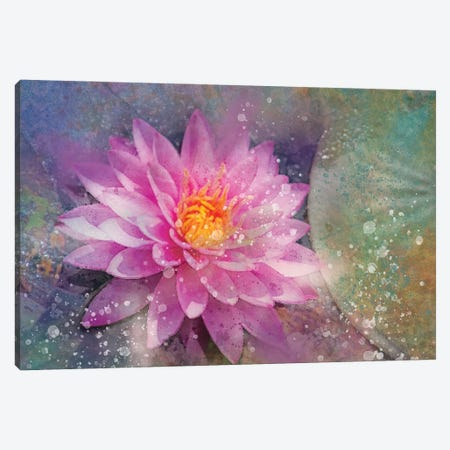 Splashy Pink Water Lilly Canvas Print #KCF28} by Kevin Clifford Canvas Art