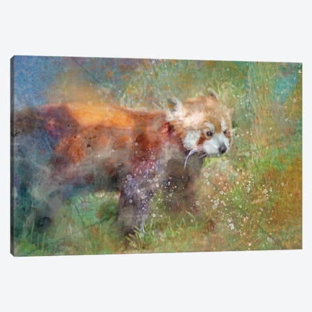 Splashy Red Panda Canvas Print #KCF3} by Kevin Clifford Canvas Art Print