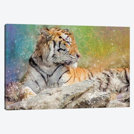 Splashy Tiger Canvas Print #KCF4} by Kevin Clifford Canvas Art