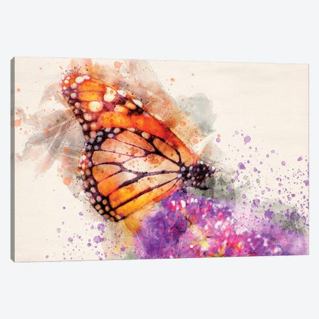 Butterfly I Canvas Print #KCF55} by Kevin Clifford Canvas Art