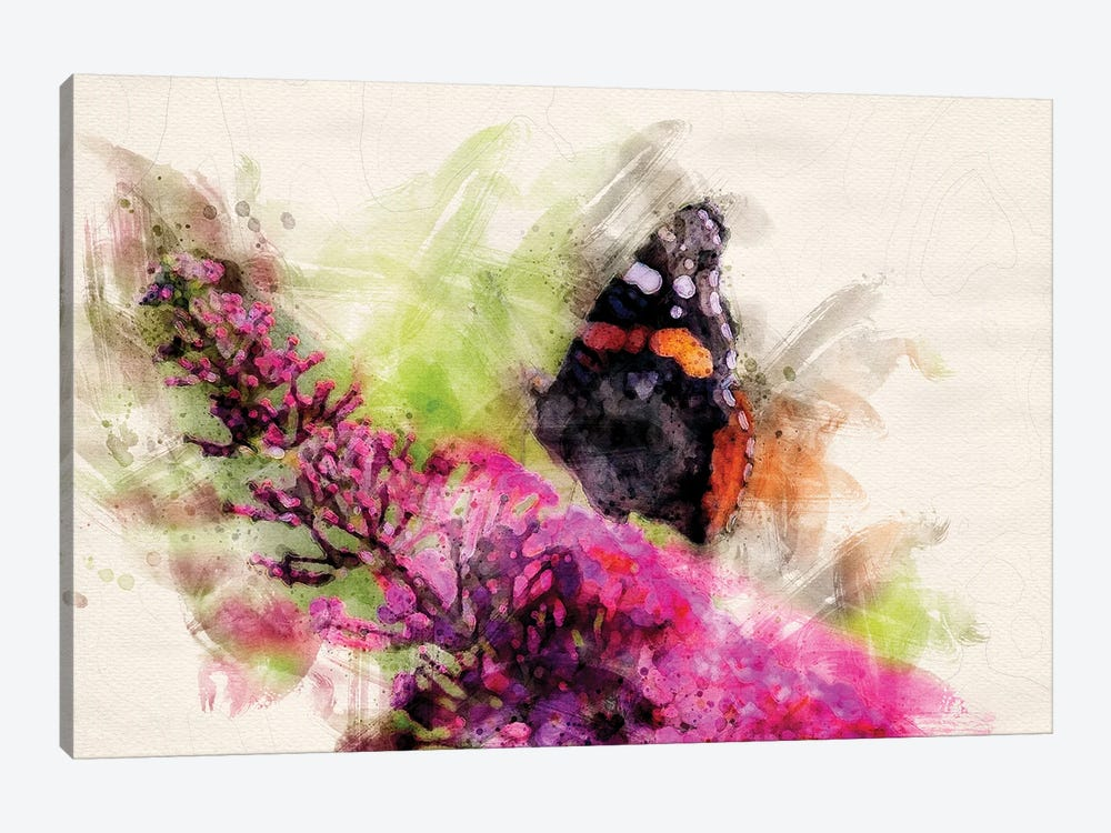 Butterfly II by Kevin Clifford 1-piece Canvas Print