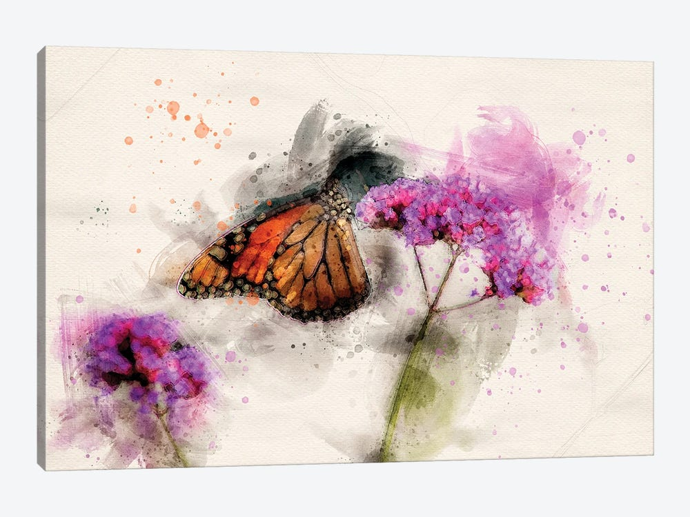 Butterfly III by Kevin Clifford 1-piece Canvas Wall Art