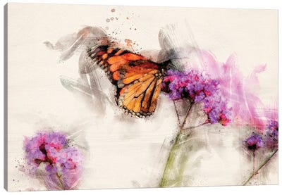 Butterfly IV Canvas Art Print