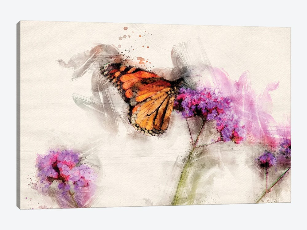 Butterfly IV by Kevin Clifford 1-piece Canvas Art Print