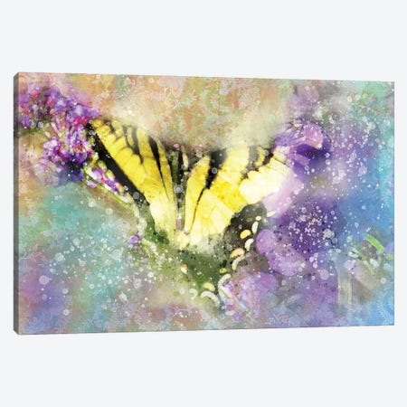 Butterfly V Canvas Print #KCF59} by Kevin Clifford Art Print
