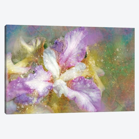 Splashy Purple And Blue Iris Canvas Print #KCF5} by Kevin Clifford Canvas Wall Art