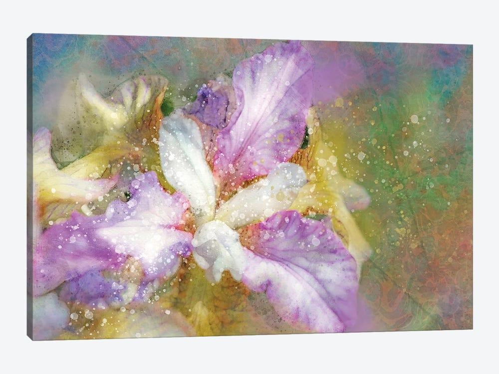 Splashy Purple And Blue Iris by Kevin Clifford 1-piece Canvas Print