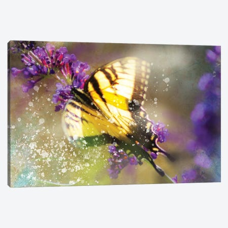 Butterfly VI Canvas Print #KCF60} by Kevin Clifford Canvas Art