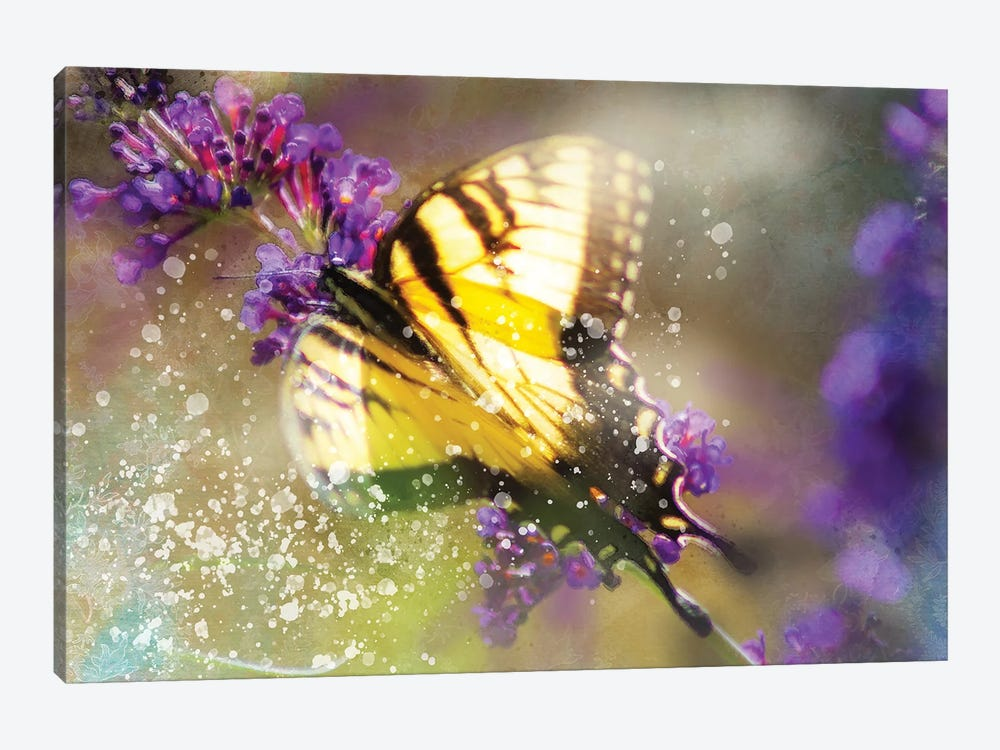 Butterfly VI by Kevin Clifford 1-piece Canvas Art