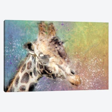 Giraffe Canvas Print #KCF61} by Kevin Clifford Canvas Wall Art