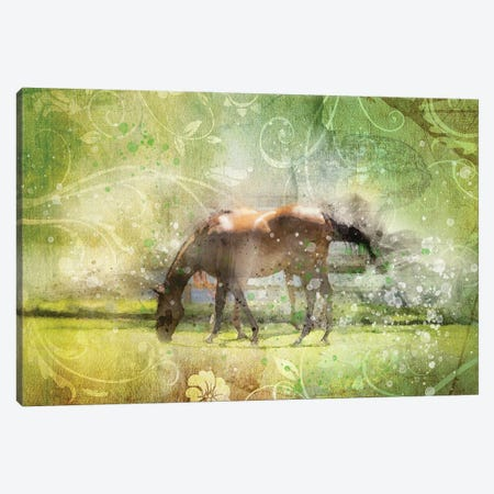 Horse Canvas Print #KCF62} by Kevin Clifford Canvas Art