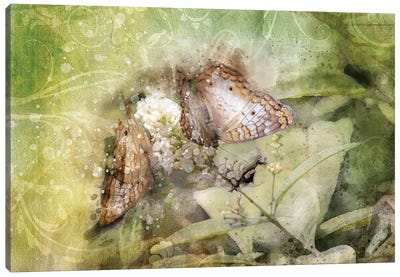 Butterfly VII Canvas Art Print