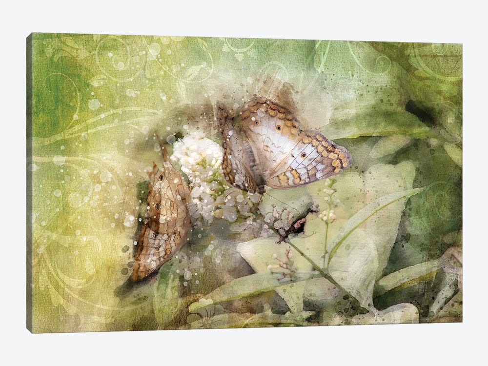 Butterfly VII by Kevin Clifford 1-piece Art Print