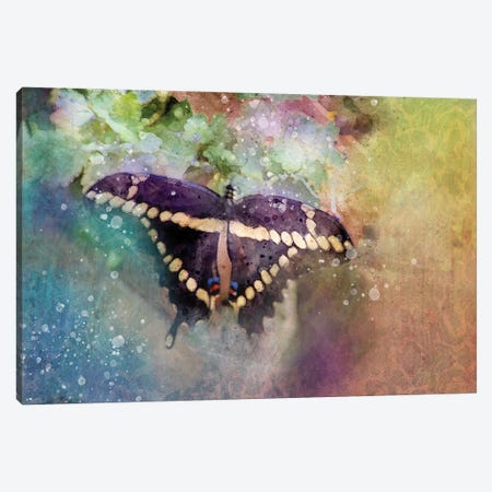 Black Butterfly Canvas Print #KCF67} by Kevin Clifford Canvas Art Print