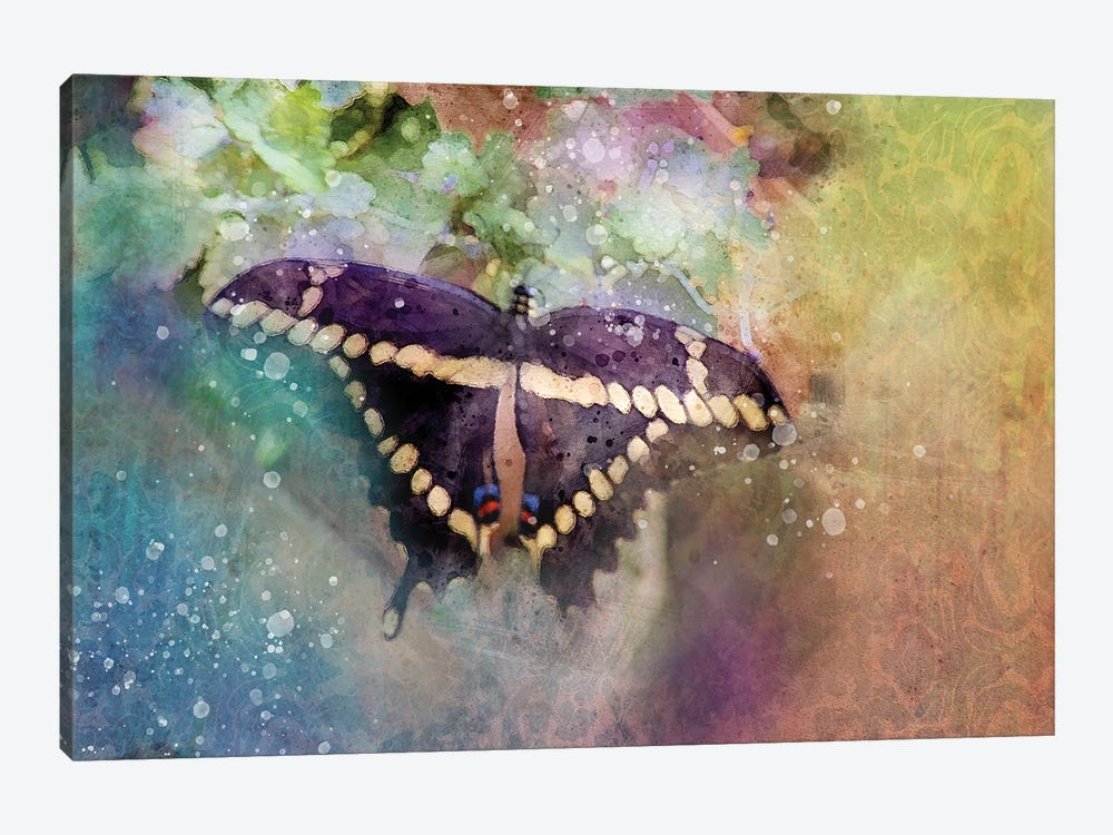 Black Butterfly by Kevin Clifford 1-piece Art Print