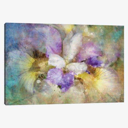 Splashy Purple Iris Canvas Print #KCF6} by Kevin Clifford Canvas Artwork