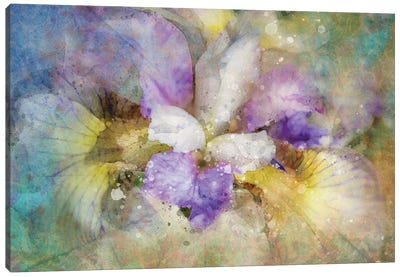 Splashy Purple Iris Canvas Art Print