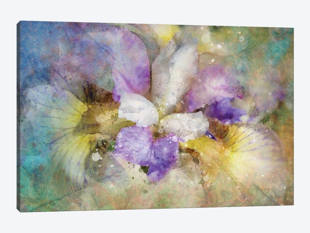 Splashy Purple Iris by Kevin Clifford 1-piece Canvas Wall Art
