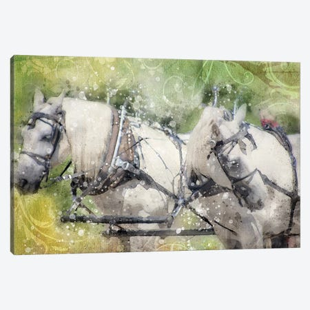 Horse Looking Back Canvas Print #KCF79} by Kevin Clifford Canvas Print