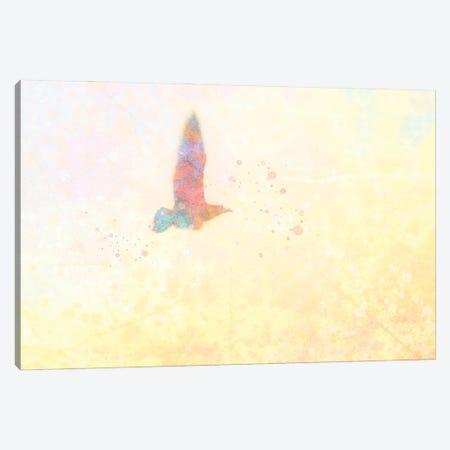 Mystic Gull Canvas Print #KCF82} by Kevin Clifford Canvas Art