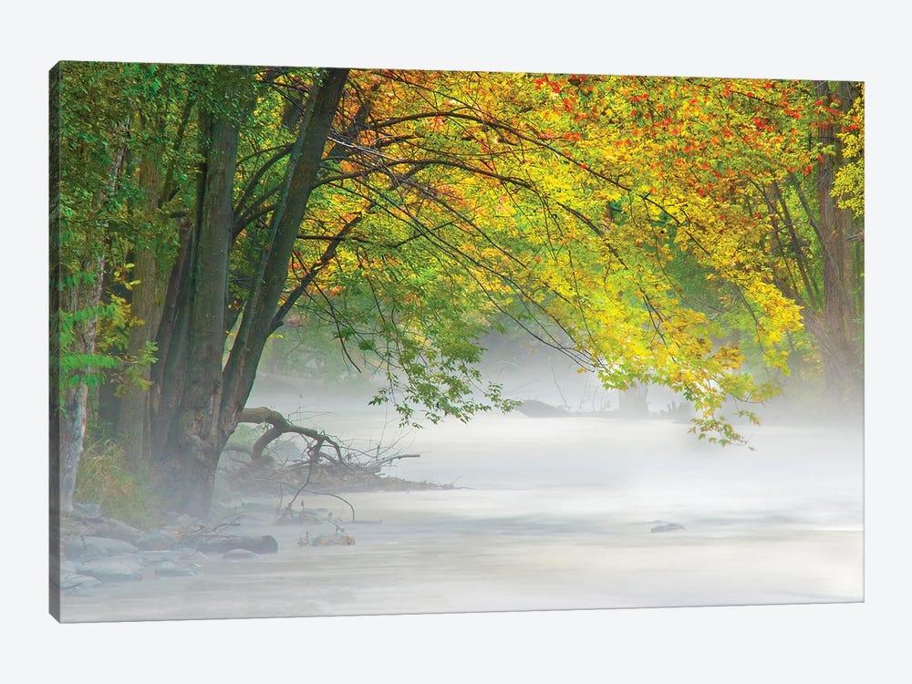 Peaceful Fog by Kevin Clifford 1-piece Canvas Wall Art