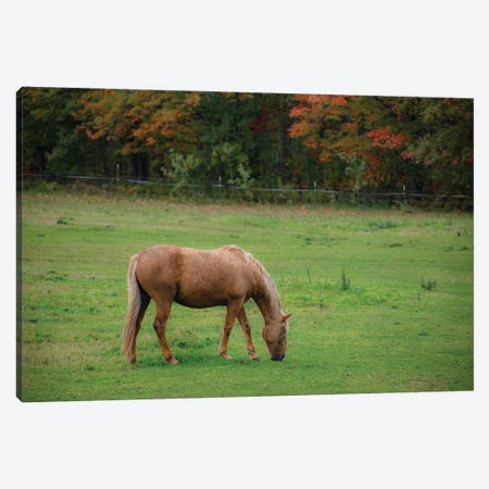 Autumn Horse Canvas Print #KCF96} by Kevin Clifford Canvas Art