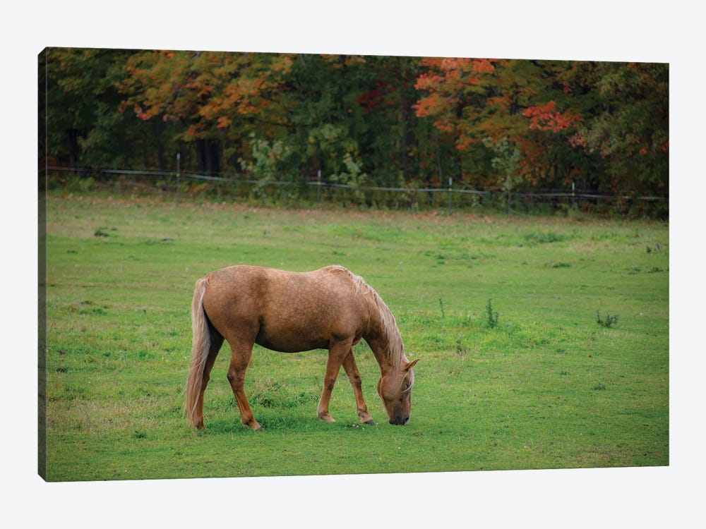 Autumn Horse by Kevin Clifford 1-piece Canvas Print