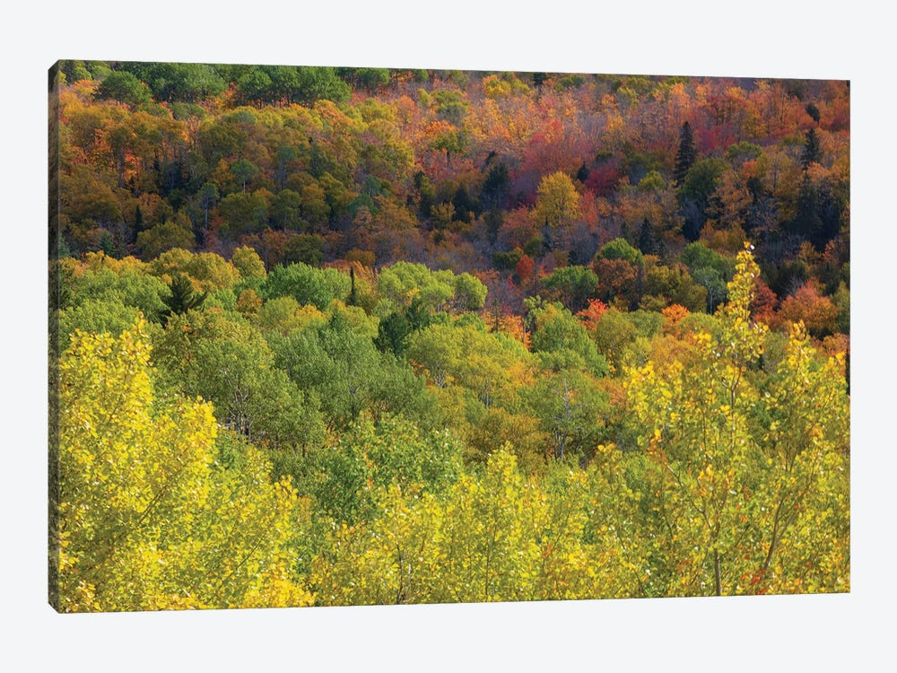 Fall Splendor by Kevin Clifford 1-piece Canvas Art
