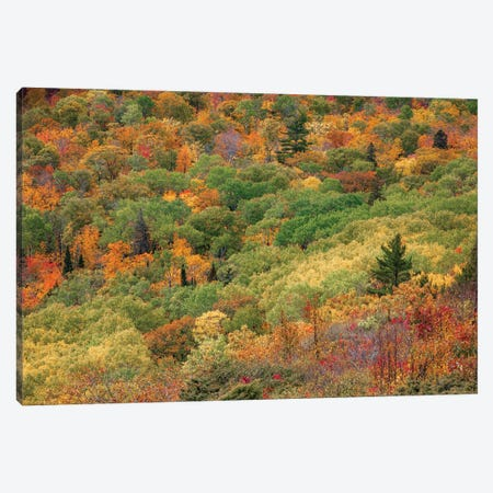 Brockway Colors Canvas Print #KCF98} by Kevin Clifford Canvas Art Print