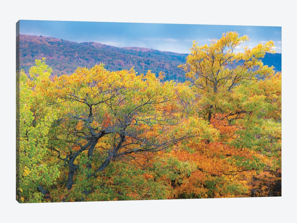 Brockway Trees by Kevin Clifford 1-piece Canvas Wall Art
