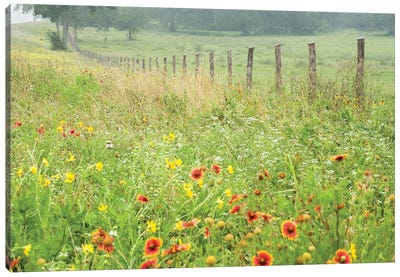 Flowers Along A Fence Canvas Art Print