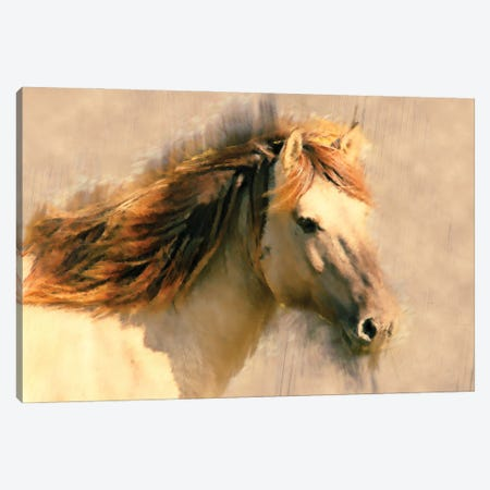 Blended Horse I Canvas Print #KCU18} by Kim Curinga Canvas Art