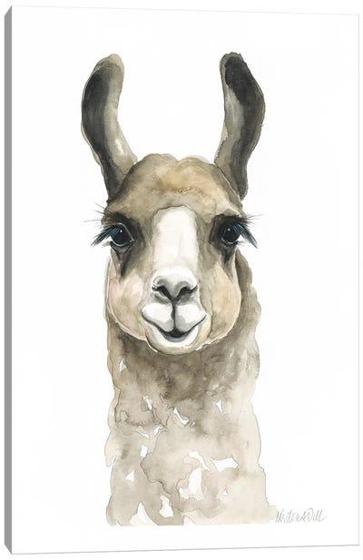 Brown Llama Canvas Art Print