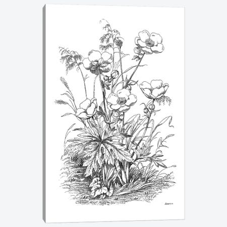 Botanical Black And White IV Canvas Print #KDO10} by Kelly Donovan Canvas Print