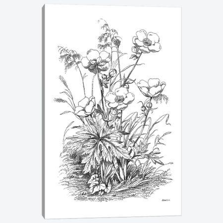 Botanical Black And White IV Canvas Print #KDO10} by Kelly Donovan Canvas Print