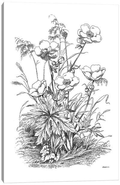 Botanical Black And White IV Canvas Art Print