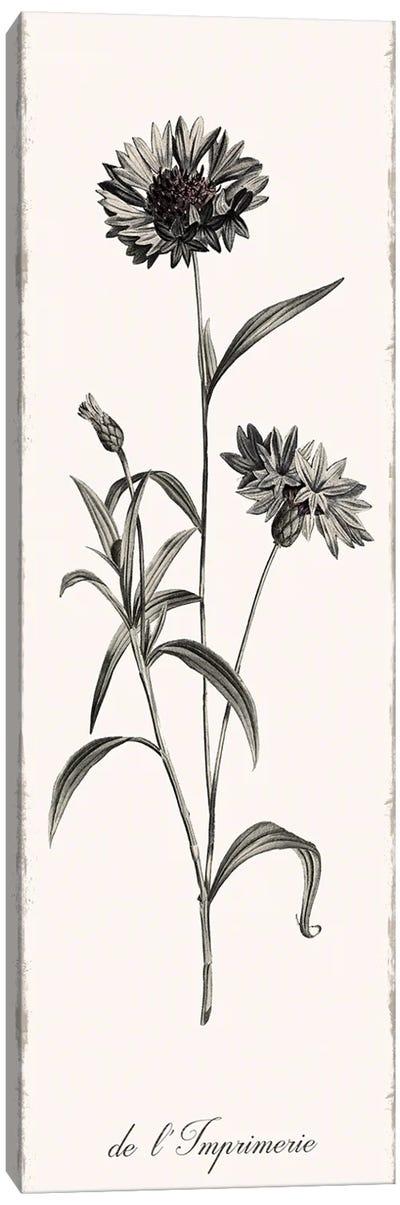 Slender Imperial Canvas Art Print